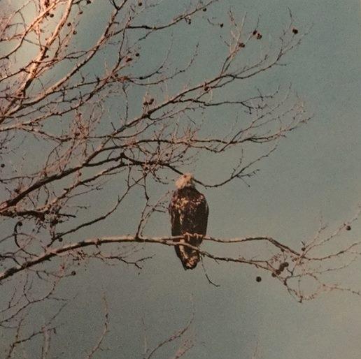 Imm Eagle