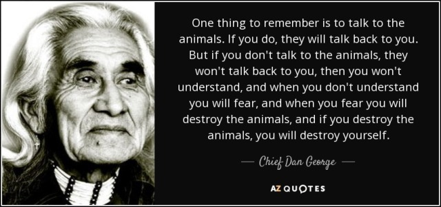 quote-one-thing-to-remember-is-to-talk-to-the-animals-if-you-do-they-will-talk-back-to-you-chief-dan-george-103-46-91.jpg