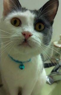 Hobo wearing a mascara mustache.
