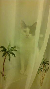 Hobo hiding in the shower.